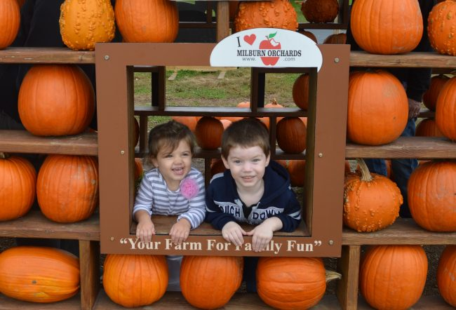 pre-schoolers playing in pumpkin patch at Milburn Orchards